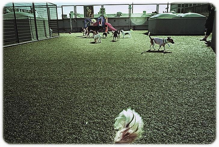 WagHotel15 5 звездочный отель для собак