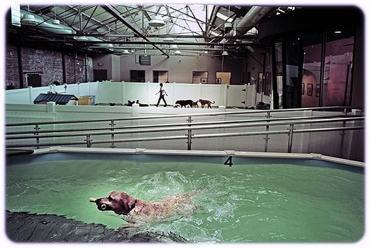 WagHotel16 5 звездочный отель для собак