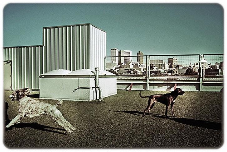 WagHotel17 5 звездочный отель для собак