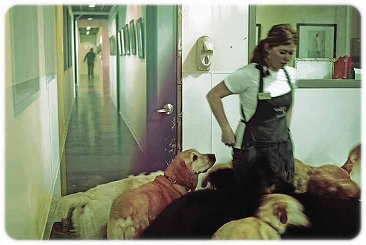WagHotel20 5 звездочный отель для собак