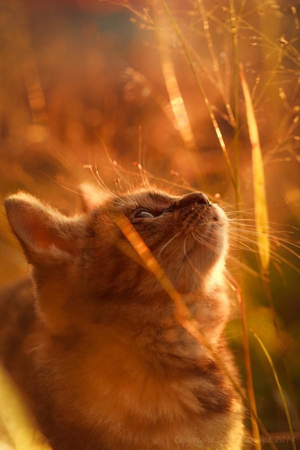 cats01 Всем любителям кошек посвящается