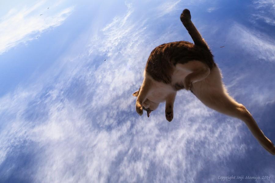 cats02 Всем любителям кошек посвящается