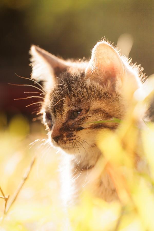 cats04 Всем любителям кошек посвящается