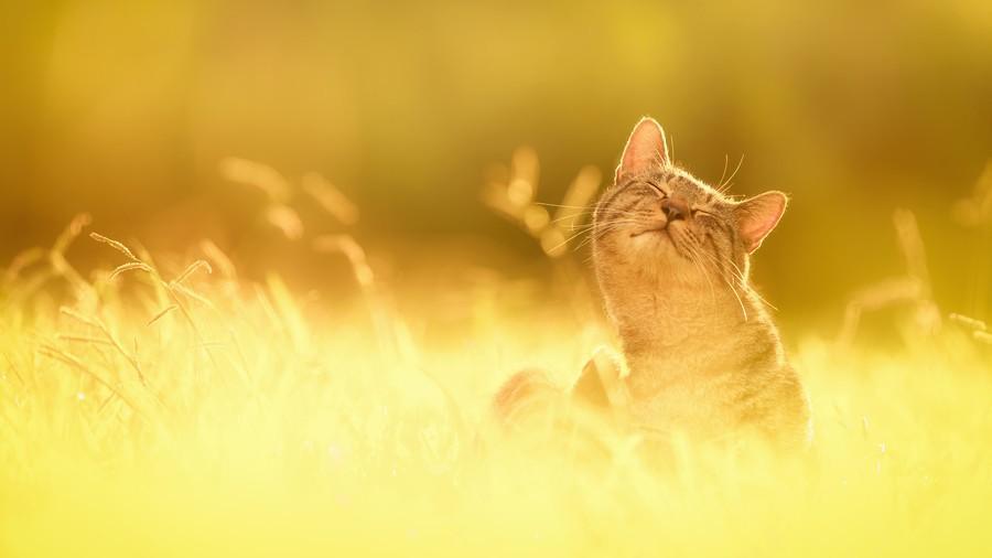 cats05 Всем любителям кошек посвящается