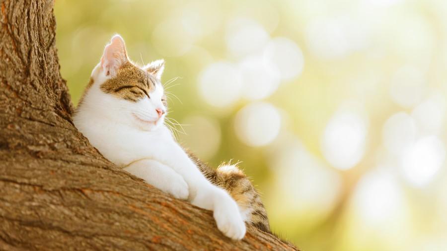 cats06 Всем любителям кошек посвящается