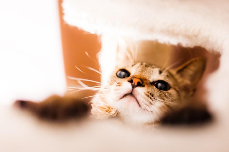 cats07 Всем любителям кошек посвящается