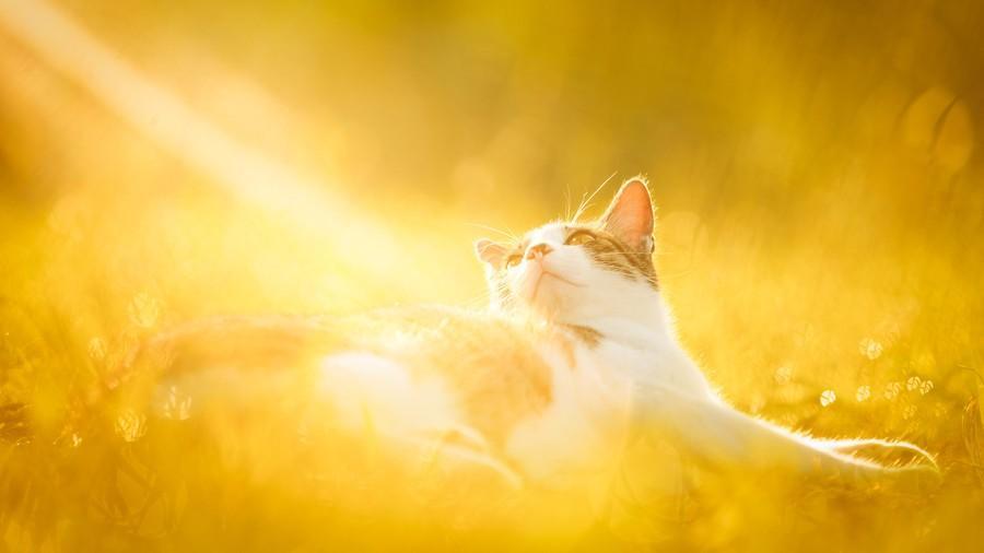 cats08 Всем любителям кошек посвящается