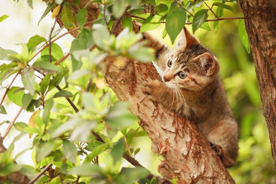 cats09 Всем любителям кошек посвящается