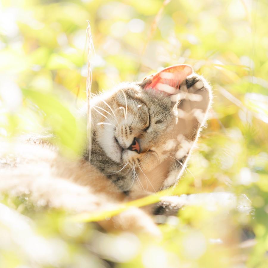 cats11 Всем любителям кошек посвящается
