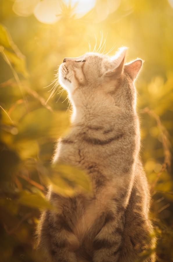 cats12 Всем любителям кошек посвящается