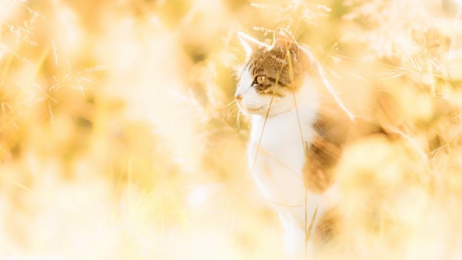 cats13 Всем любителям кошек посвящается