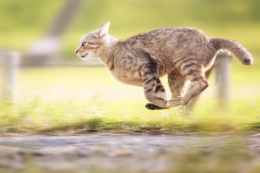 cats14 Всем любителям кошек посвящается