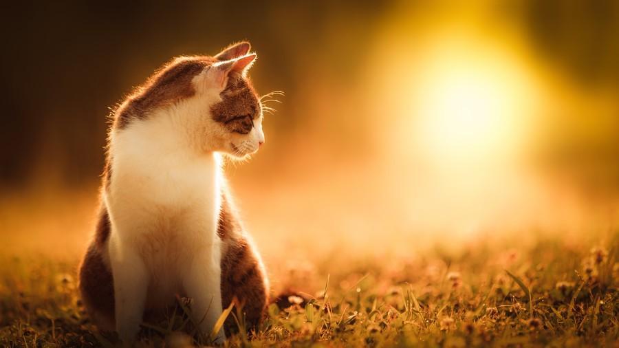 cats15 Всем любителям кошек посвящается