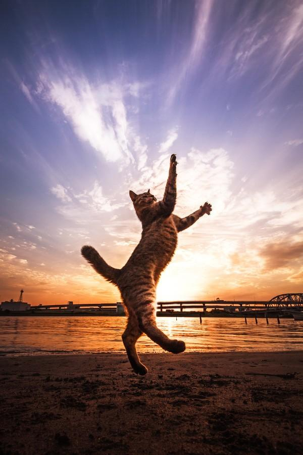 cats16 Всем любителям кошек посвящается