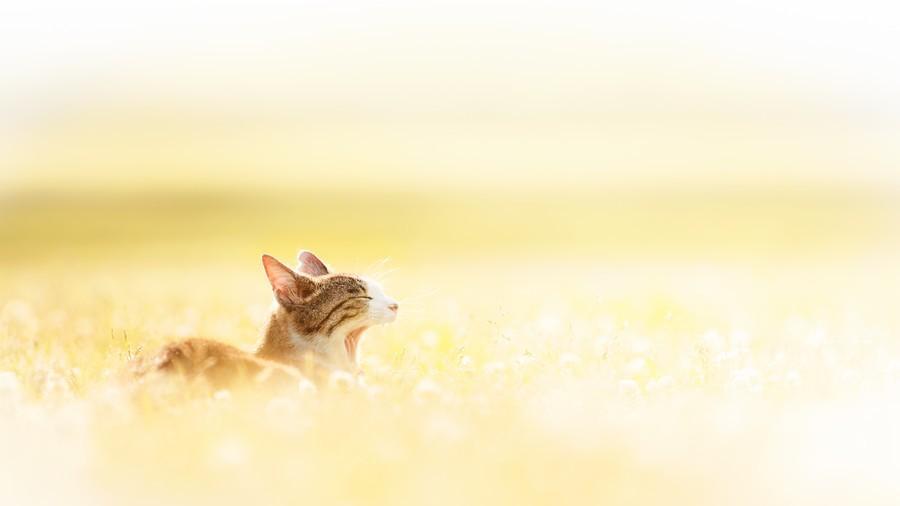 cats17 Всем любителям кошек посвящается