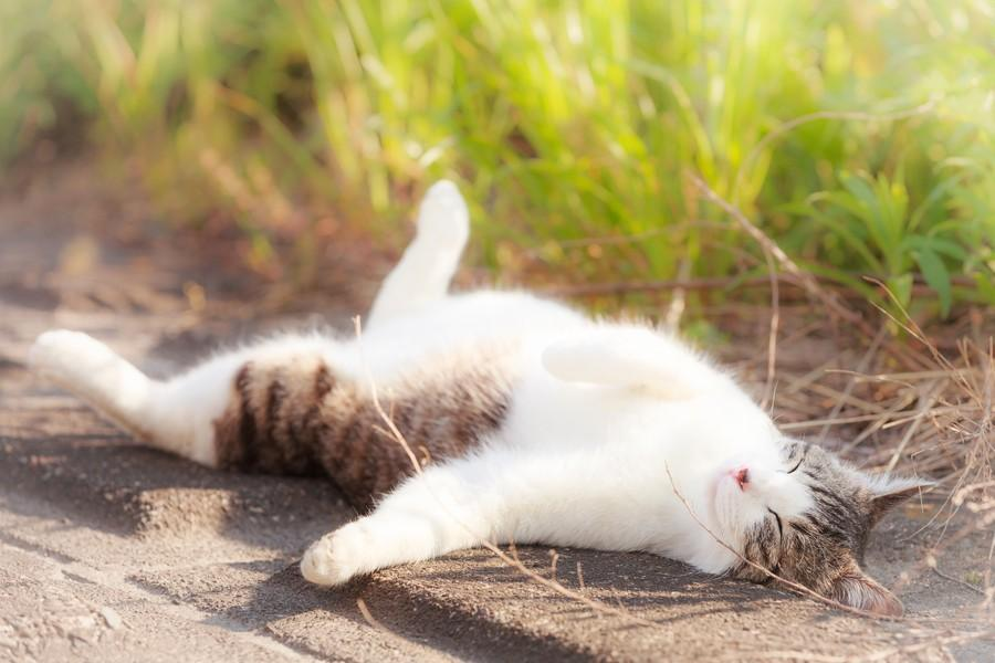 cats18 Всем любителям кошек посвящается