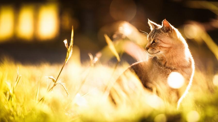 cats19 Всем любителям кошек посвящается
