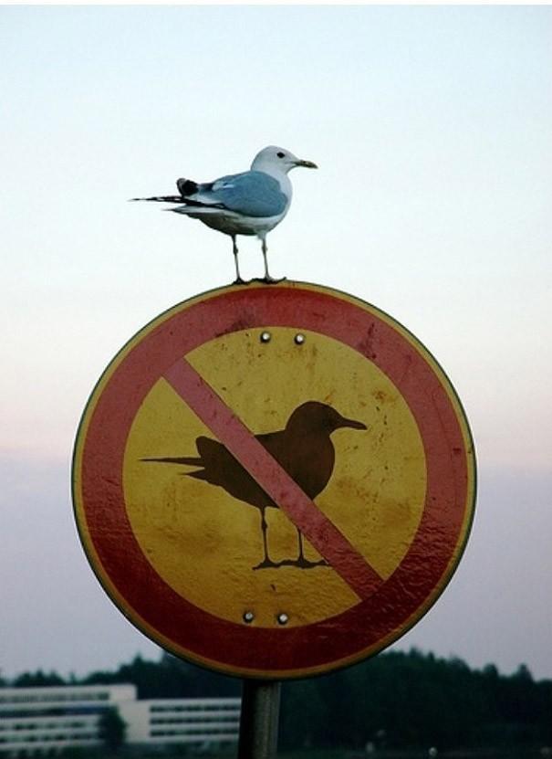 fcukthesystem01 Пост для тех, кто хоть раз в жизни нарушал дурацкие правила
