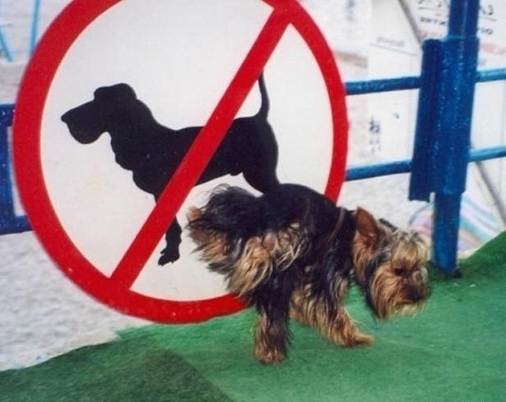 fcukthesystem14 Пост для тех, кто хоть раз в жизни нарушал дурацкие правила