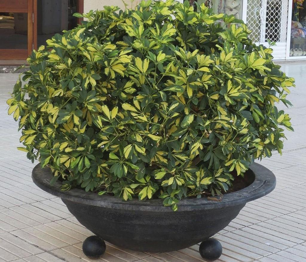 plants01 Комнатные растения, очищающие воздух