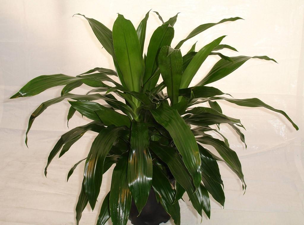 plants03 Комнатные растения, очищающие воздух