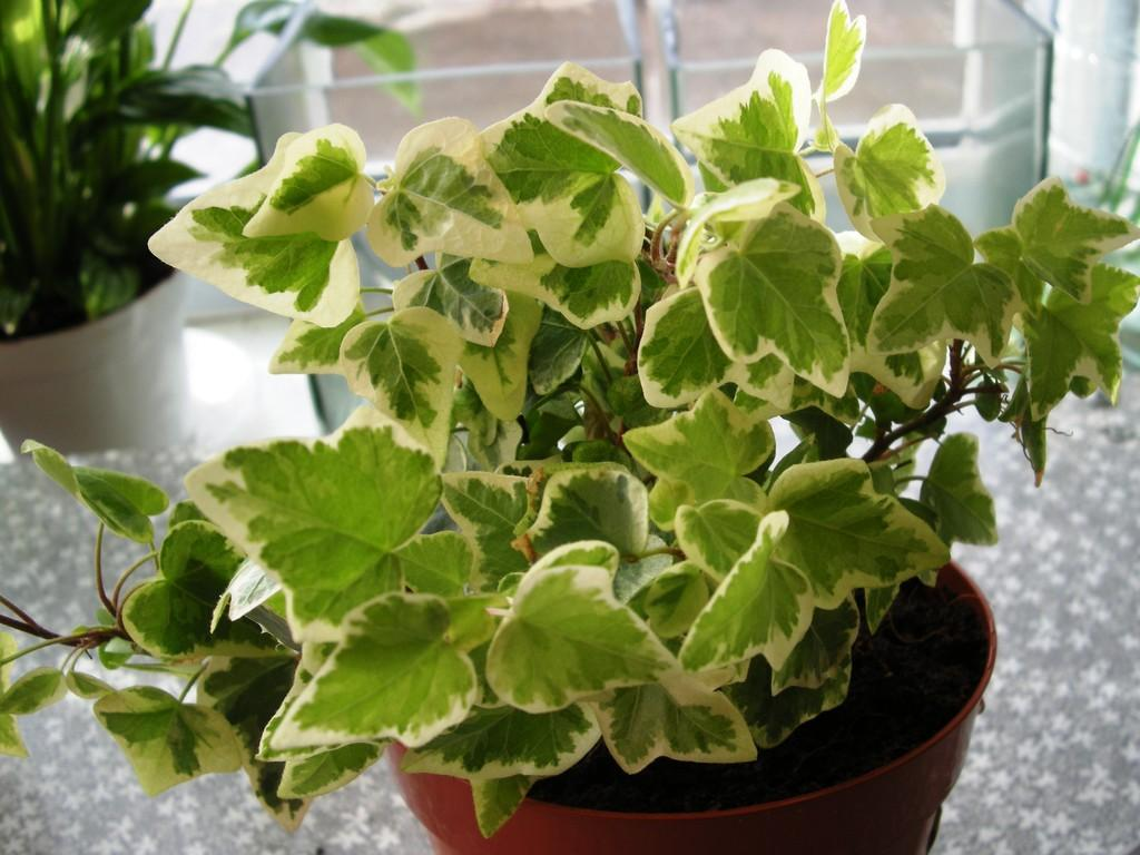 plants06 Комнатные растения, очищающие воздух