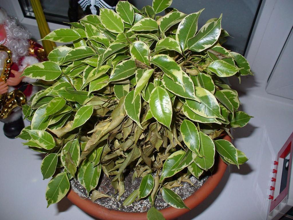 plants07 Комнатные растения, очищающие воздух