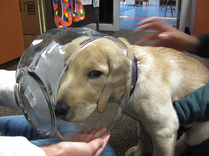 whenURnothome04 Чем занят пес, когда хозяев нет дома