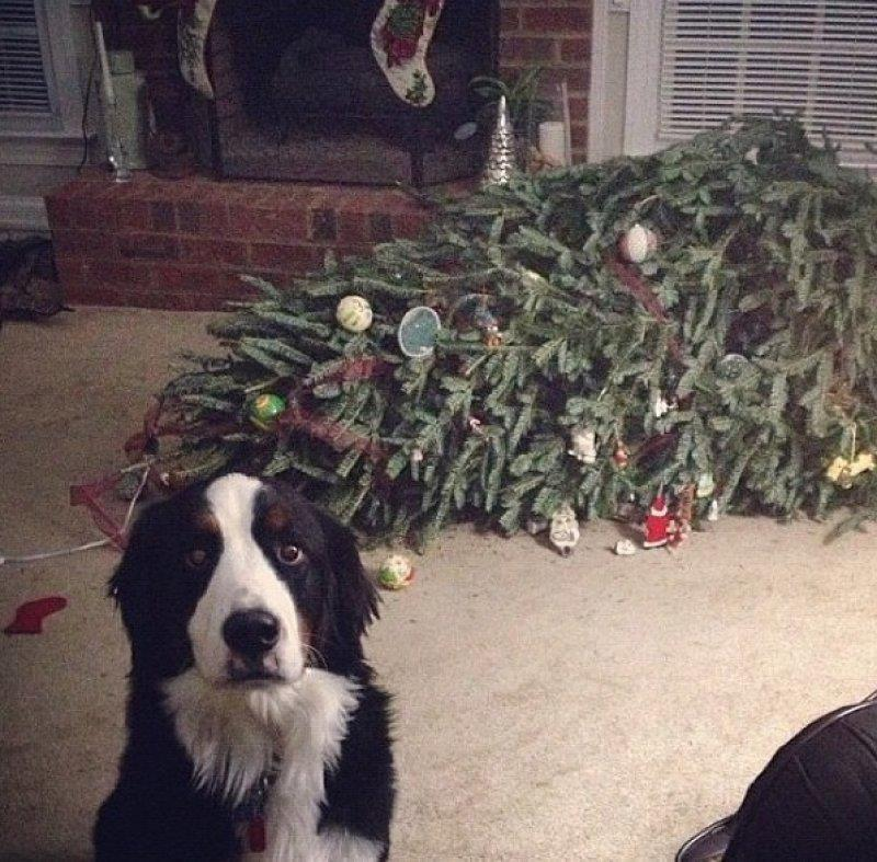 whenURnothome22 Чем занят пес, когда хозяев нет дома