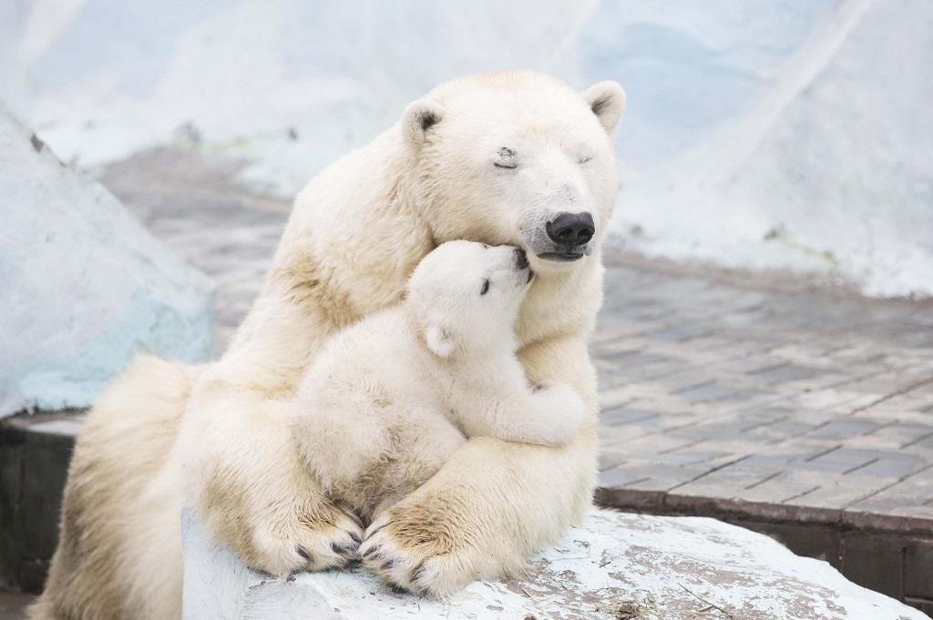 1жив за неделю 10 Лучшие фото животных этой недели