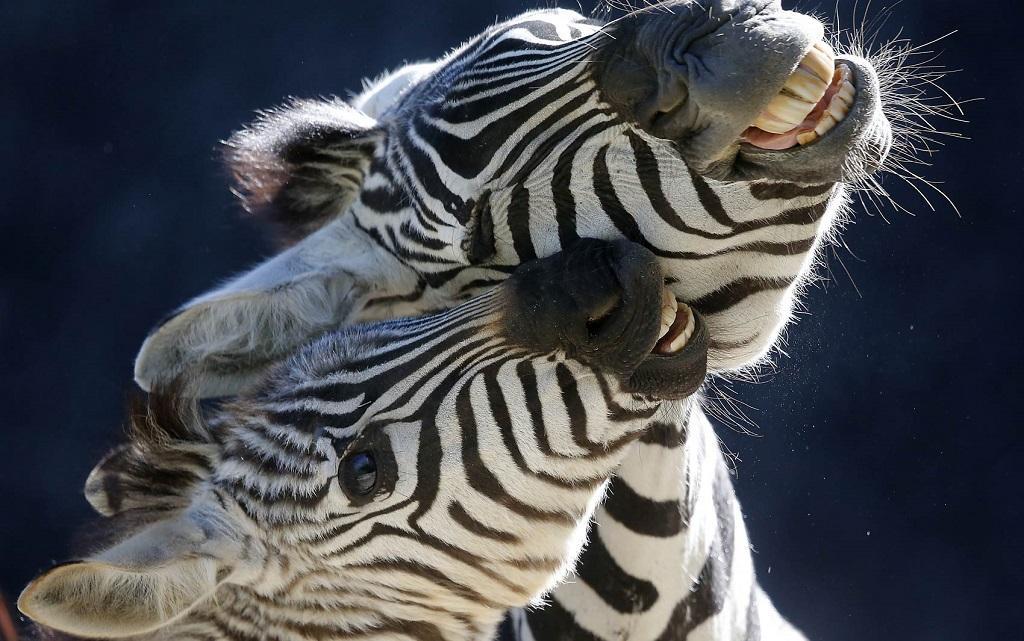 1жив за неделю 13 Лучшие фото животных этой недели