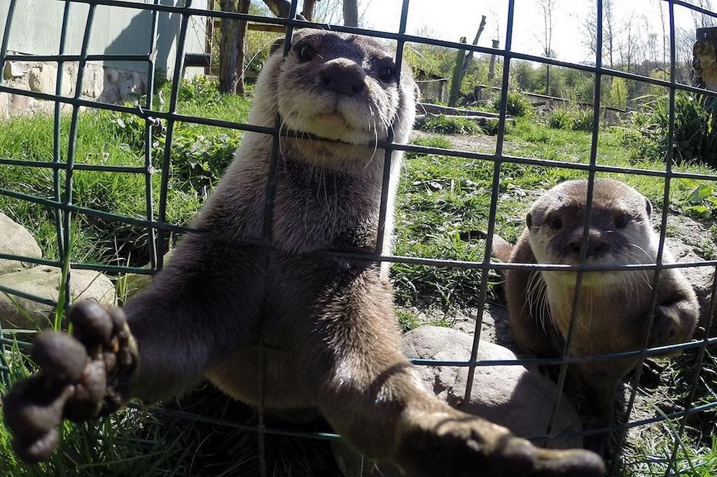 1жив за неделю 3 Лучшие фото животных этой недели