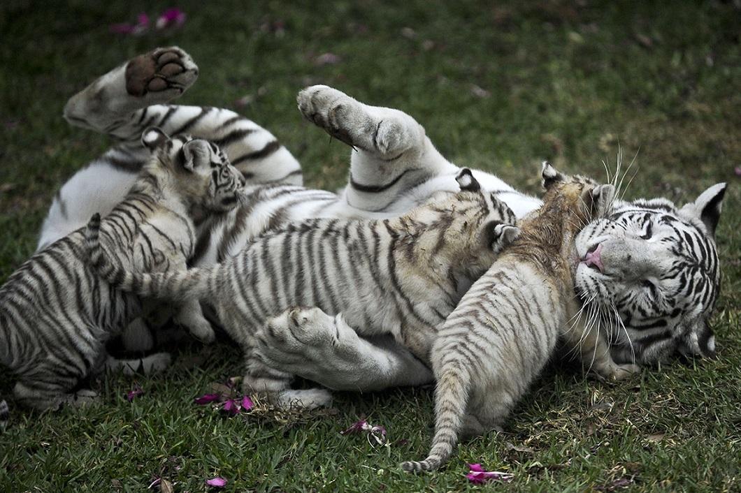 2014apr4zhivotny 1 Лучшие фотографии животных за неделю