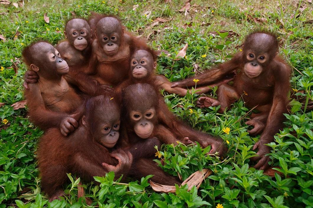 2014apr4zhivotny 8 Лучшие фотографии животных за неделю
