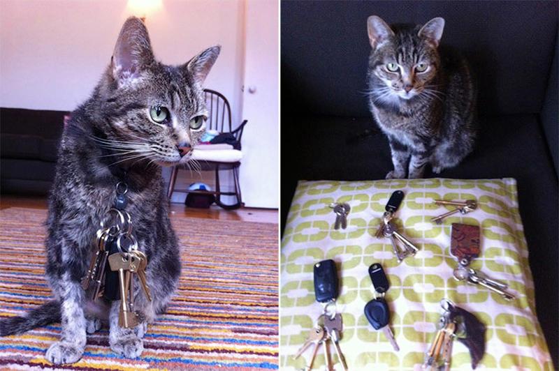 6. Этот совершенно обычный на вид кот обладает удивительной способностью - он притягивает металлические предметы! Котофей - магнит может занимать достойное место среди самых ловких воров-взломщиков: он притянул примерно 20 связок ключей, принадлежащих соседям. Сначала тайну исчезнувших ключей никто не мог разгадать, пока однажды Кирстен, хозяйка Майло, не увидела, как  ее полосатый друг крадется с чьей-то связкой, примагниченной к шерстке у горла. На самом деле, никаких сверхспособностей у Майло нет - хозяйка просто снабдила кота магнитным воротником, чтобы тот мог открыть металлическую дверцу.
