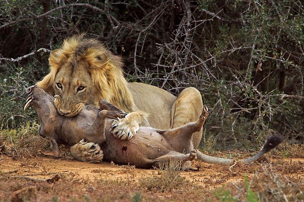 3nedelapre 10 Лучшие фотографии животных за неделю