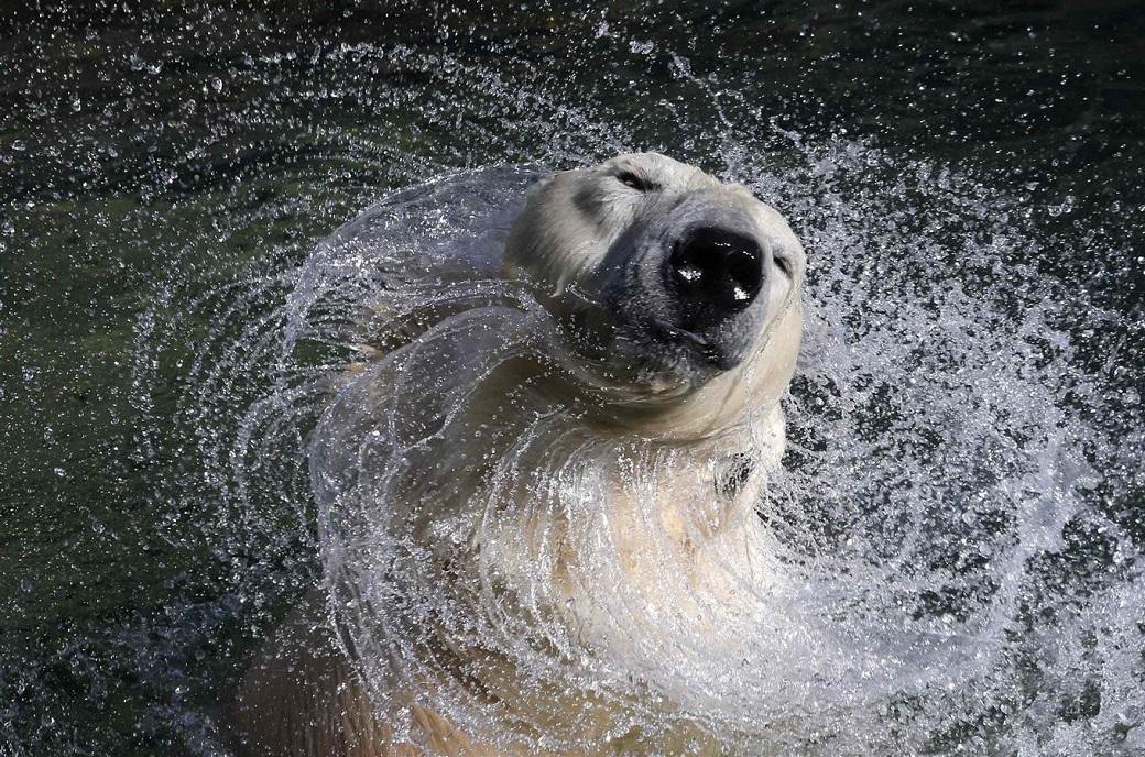 3nedelapre 14 Лучшие фотографии животных за неделю