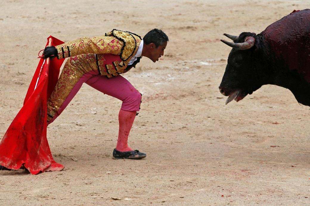 3nedelapree 16 Лучшие фотографии животных за неделю