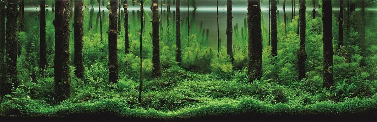 Aquascaping01 Искусство аквариумистики удивительные подводные пейзажи