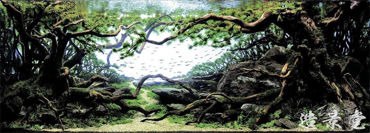 Aquascaping02 Искусство аквариумистики удивительные подводные пейзажи