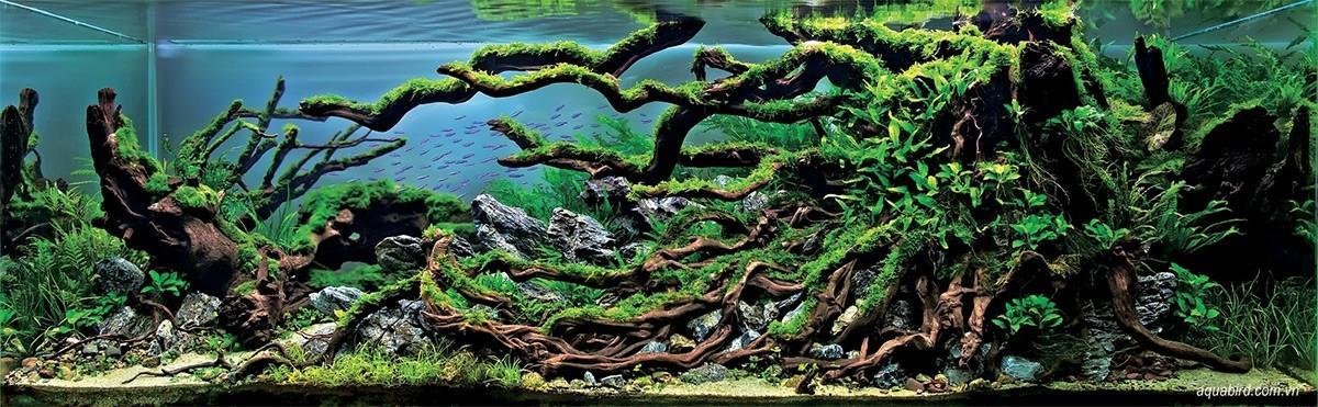 Aquascaping04 Искусство аквариумистики удивительные подводные пейзажи
