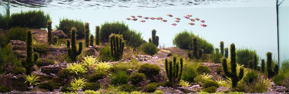 Aquascaping06 Искусство аквариумистики удивительные подводные пейзажи