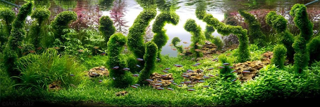 Aquascaping07 Искусство аквариумистики удивительные подводные пейзажи
