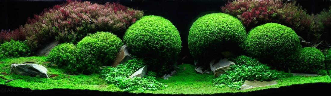 Aquascaping08 Искусство аквариумистики удивительные подводные пейзажи