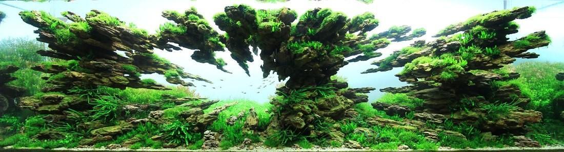 Aquascaping09 Искусство аквариумистики удивительные подводные пейзажи