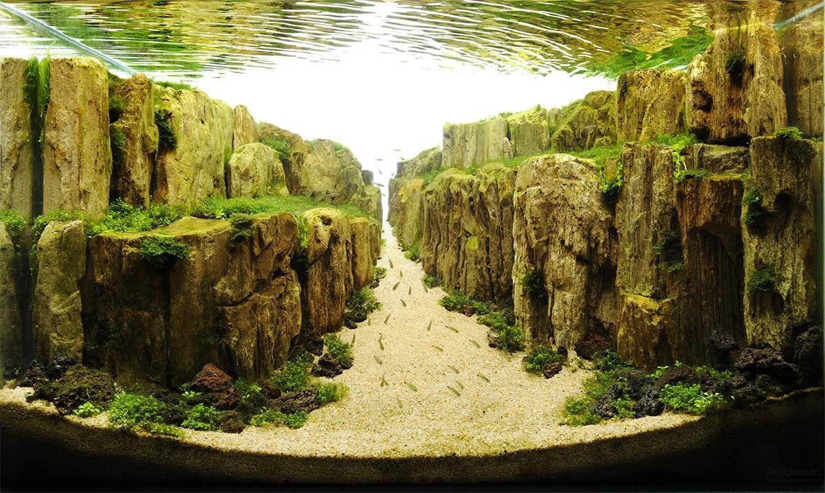 Aquascaping10 Искусство аквариумистики удивительные подводные пейзажи