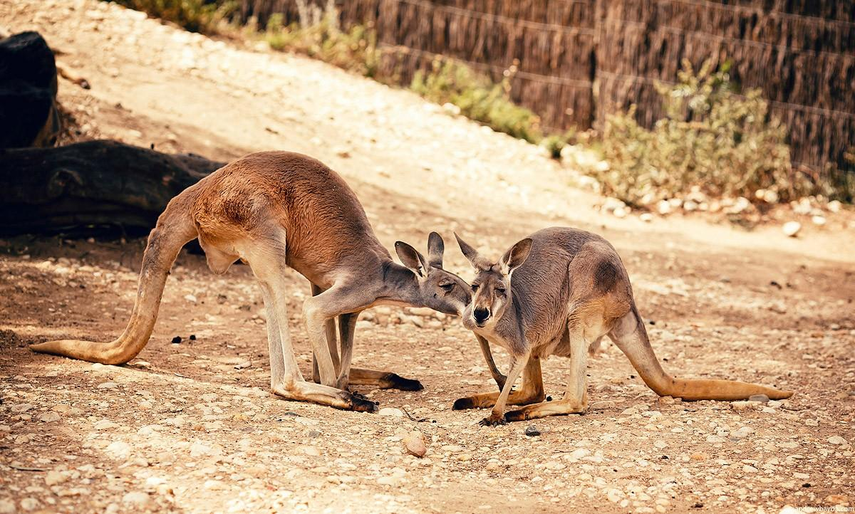 Australia09 Большое путешествие по Австралии