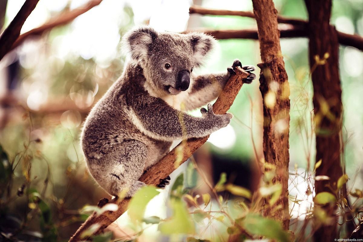 Australia47 Большое путешествие по Австралии
