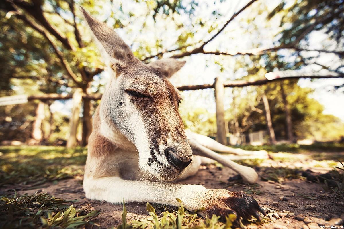 Australia49 Большое путешествие по Австралии