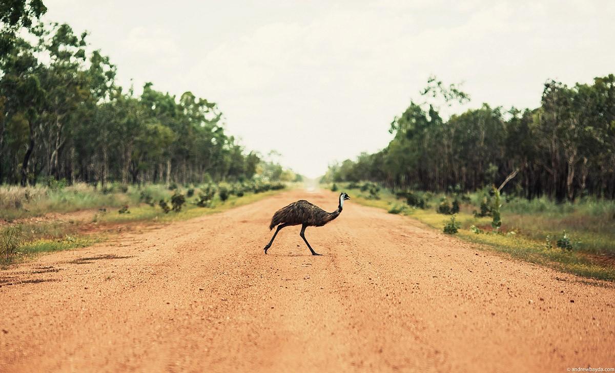 Australia77 Большое путешествие по Австралии